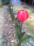 春萌え立つわが家の庭